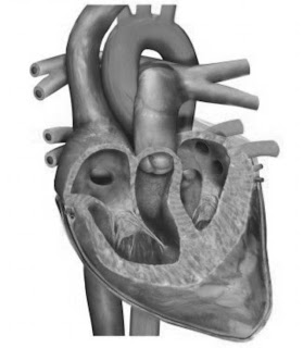 Jantung Sehat Berkat Puasa