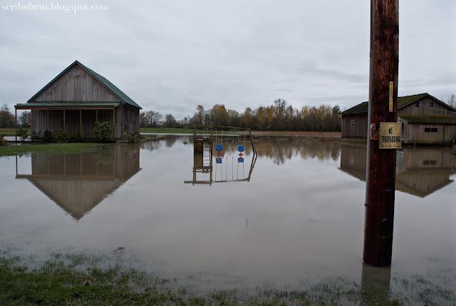 November flood