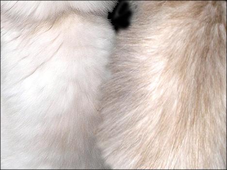 Furry butt pics, bhojpuri sex