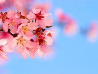 10 Jenis Bunga Paling Indah Di Dunia
