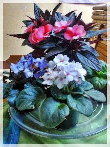 Minhas Flores em harmonia