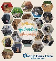 12 anos de Flora e Fauna