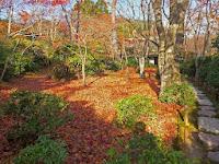 滴水庵と前庭。