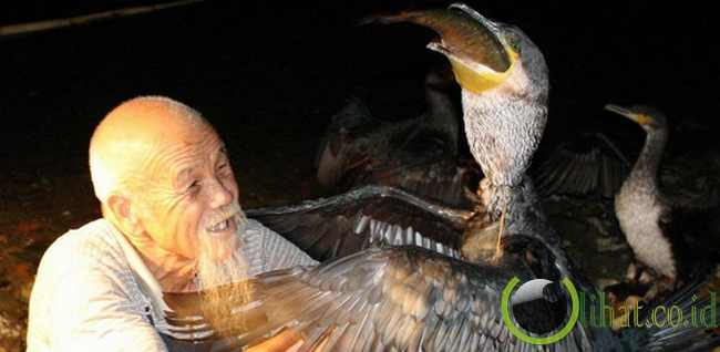 Burung Pemancing Cormorant (Fishing Cormorant)