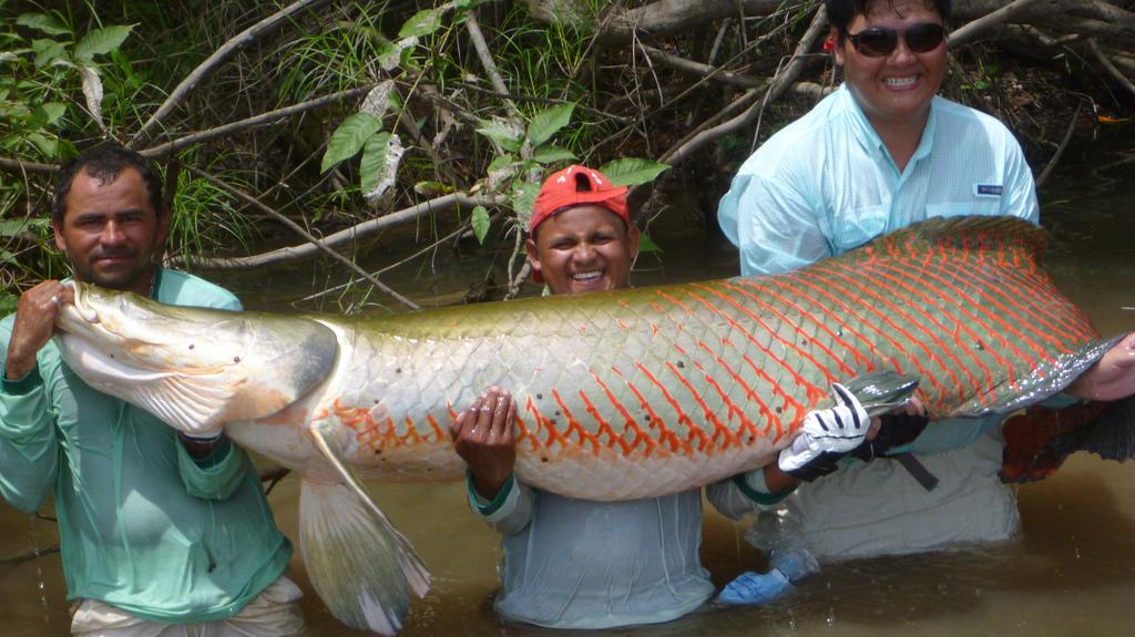 Amazoncom amazon river fish