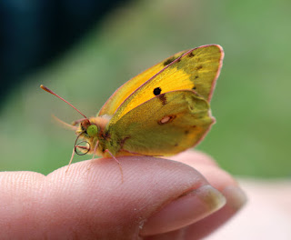 Butterfly on A's finger
