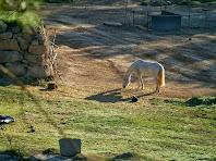Bonic cavall en terrenys de Cal Flor