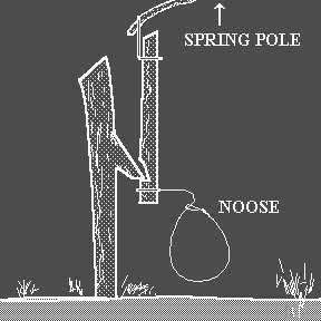 Survival Spring Pole Snare
