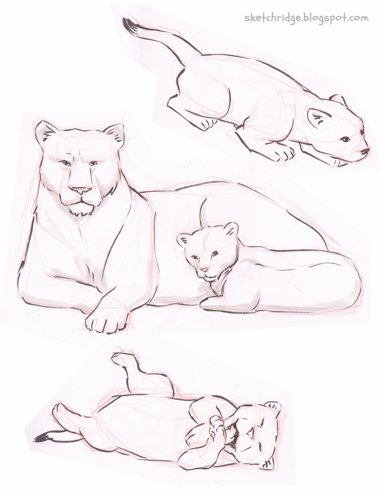 Displaying 14> Images For - Baby Lion Cub Drawing...