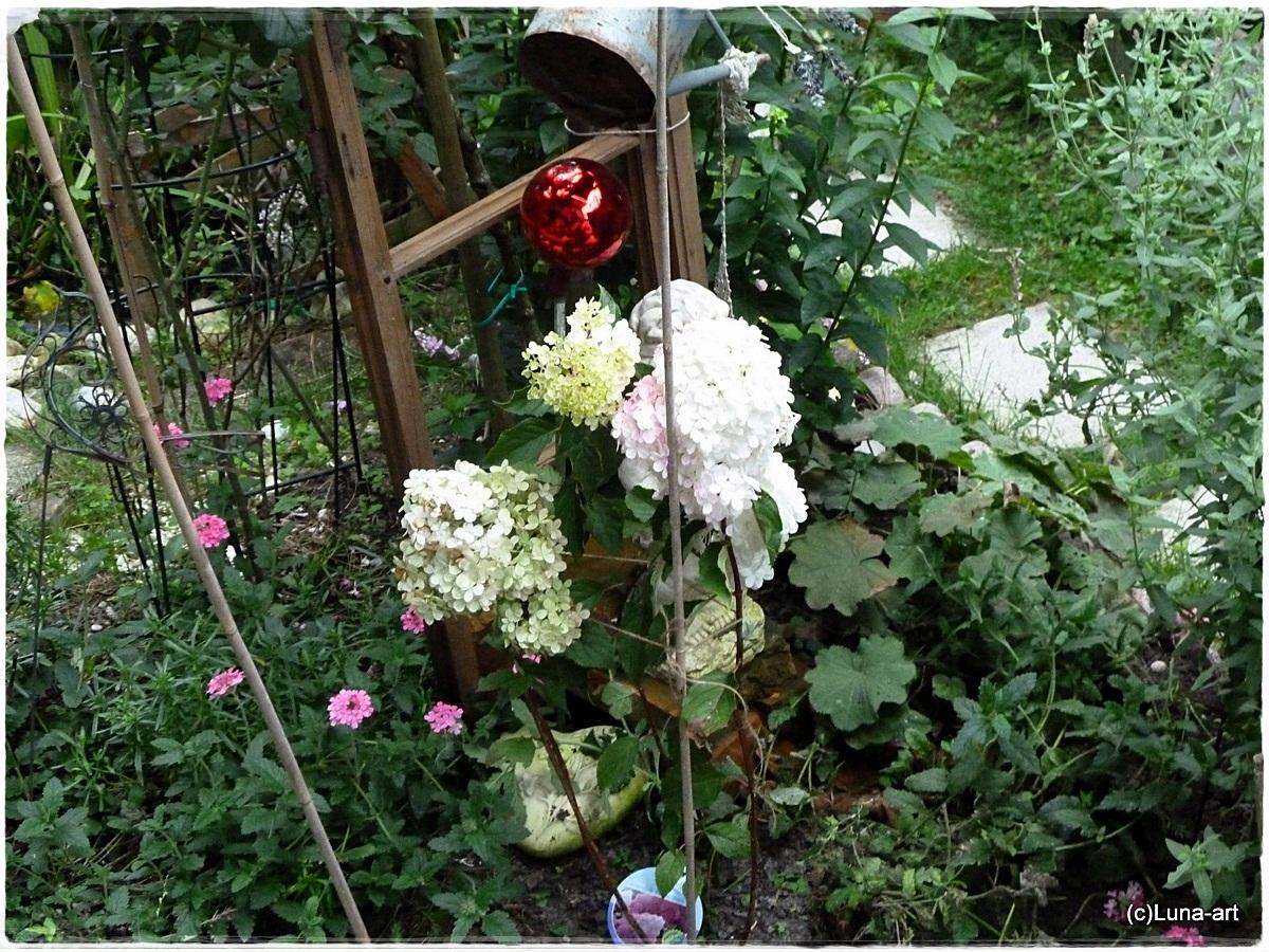 lunas garten rosen vielfalt neue hortensie. Black Bedroom Furniture Sets. Home Design Ideas