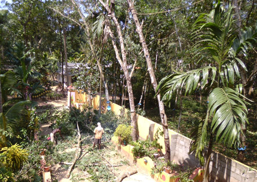 cutting rubber trees