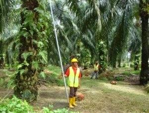 """<img src=""""Panduan Pekerjaan.jpg"""" alt=""""Panduan Lengkap 12 Bidang Pekerjaan 'Salary'Tinggi Tanpa Perlu Ijazah Di Malaysia """">"""