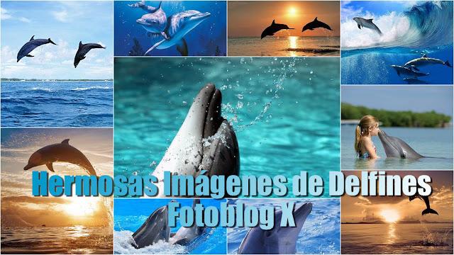 Imágenes y Fotos de Delfines en HD