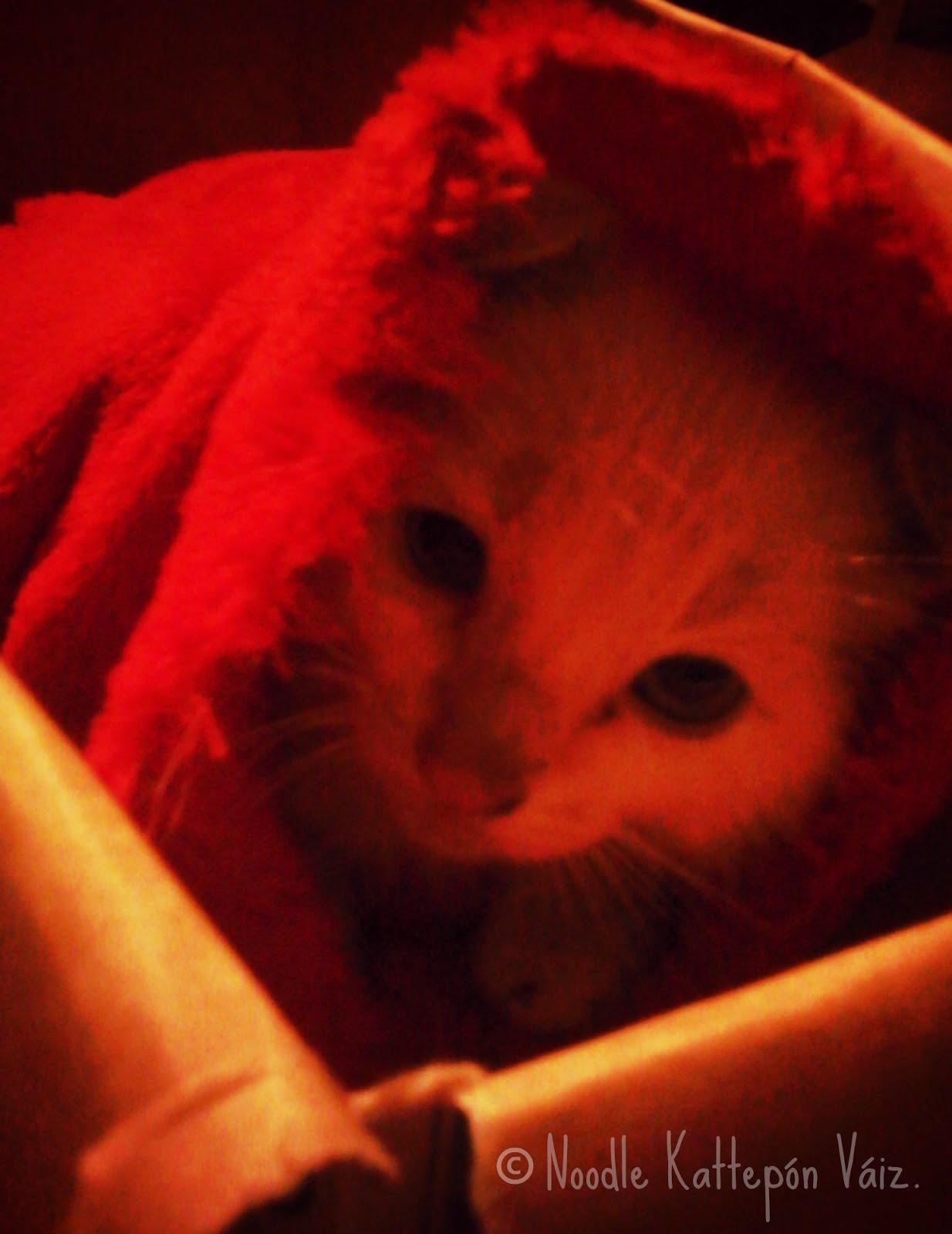 CAT MACHINE, el hermano pequeño.