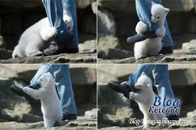 diserang beruang kutub