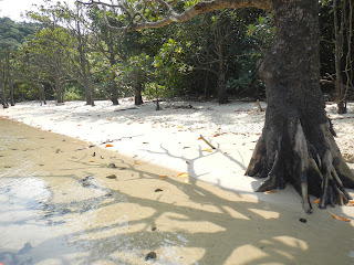 Mangroves cast shadows onto a sandy shore and shallow water