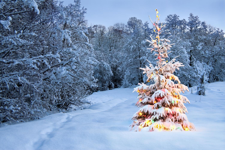 free clip arts: Christmas tree outdoor