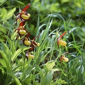 Tipos de Orquídeas Silvestres