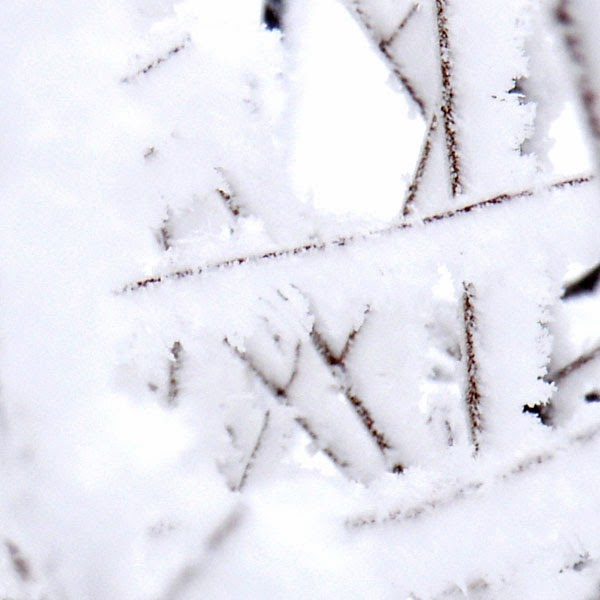 Giant Snowflakes Clinging To Tiny Branches - Snow Photograph