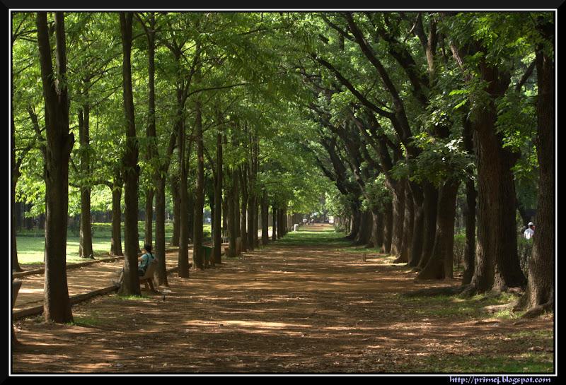 Cubbon Park, Bagngalore