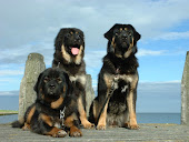 Onze andere honden