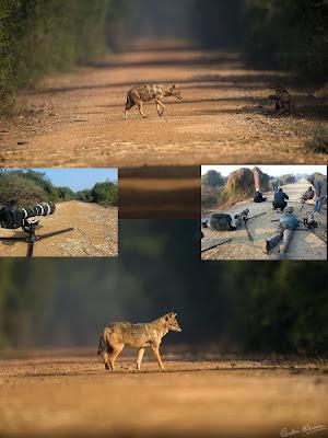 wildlife photography tips