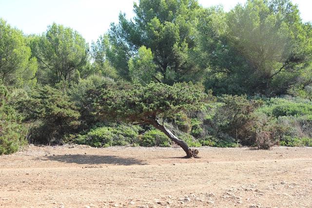 Mallorca: sa coma síllot Livinglove goes to Mallorca