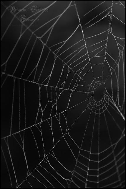 Ein Spinnennetz in einer Nahaufnahme