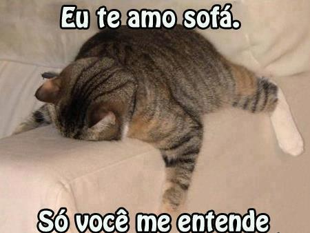 gato abraçando sofá