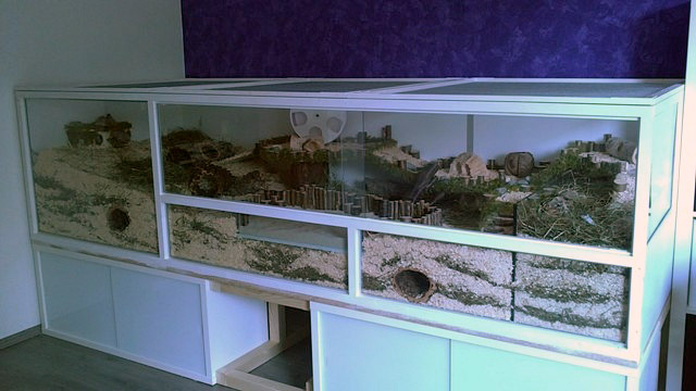 naturnahe hamstergehege 2 7m traum eigenbau 29ft square diy dream cage. Black Bedroom Furniture Sets. Home Design Ideas