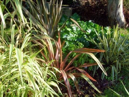 Massif exotique plantes for Plantes exotiques