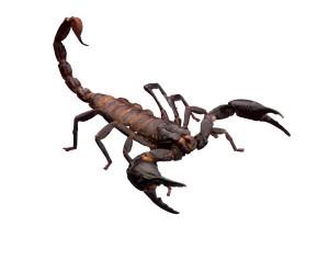 why is my scorpio man pulling away