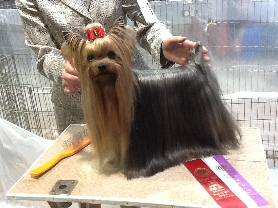 Best Dog Shampoo For Shiny Coat