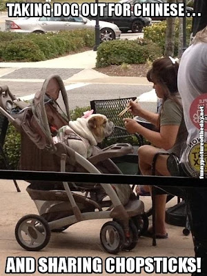 Spoiled Funny Dog In Baby Stroller Eating Chinese And Sharing Chopsticks