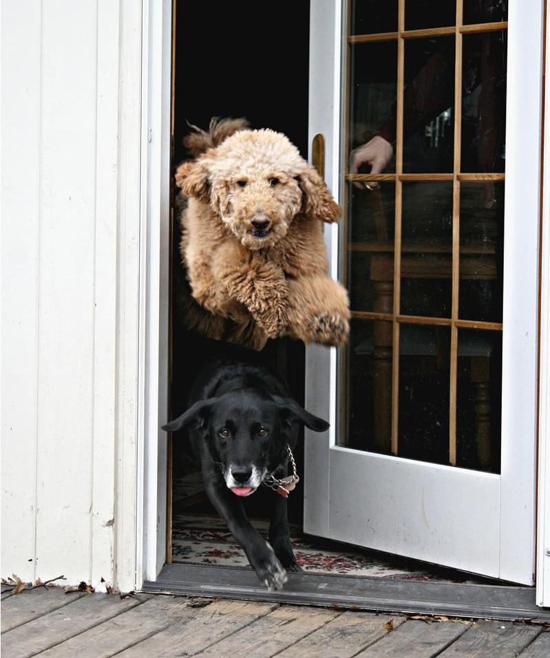 cachorros voando um por cima outro embaixo