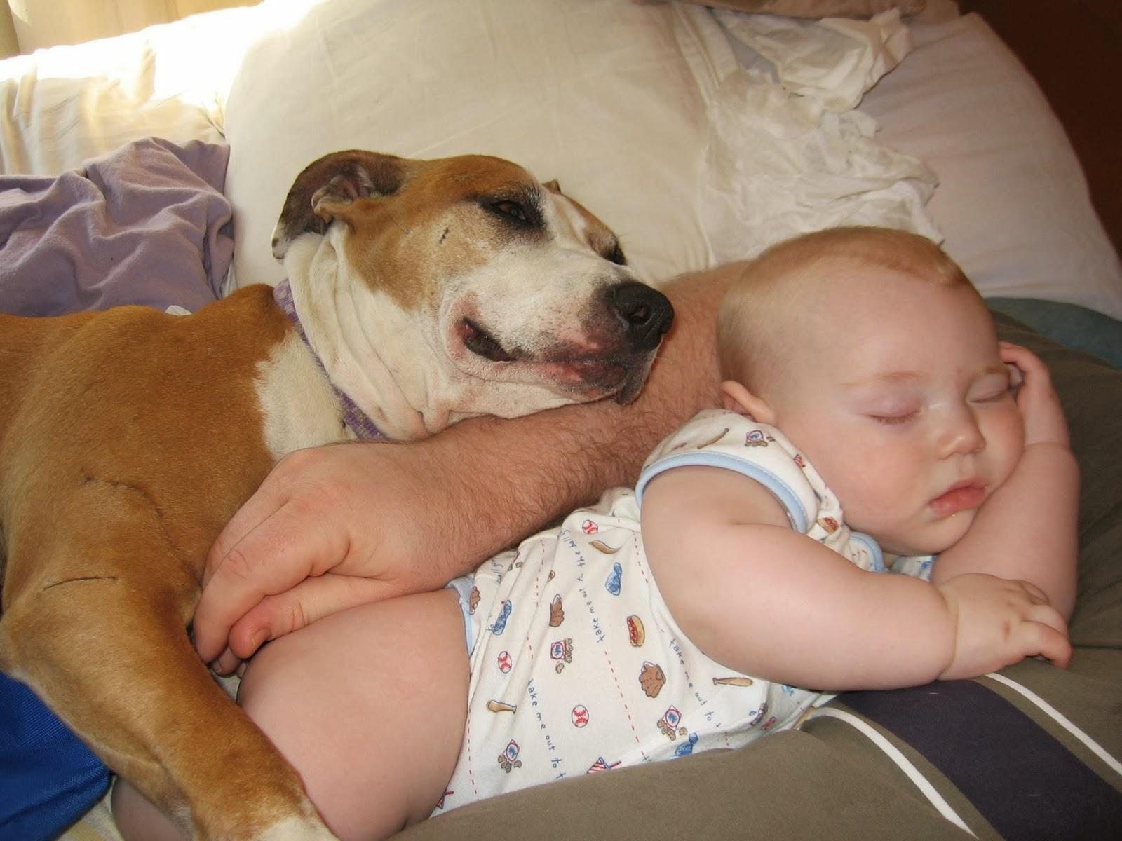 Фото питбуля с ребенком