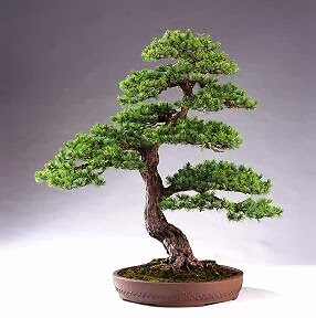 nghe thuat cay canh bonsai