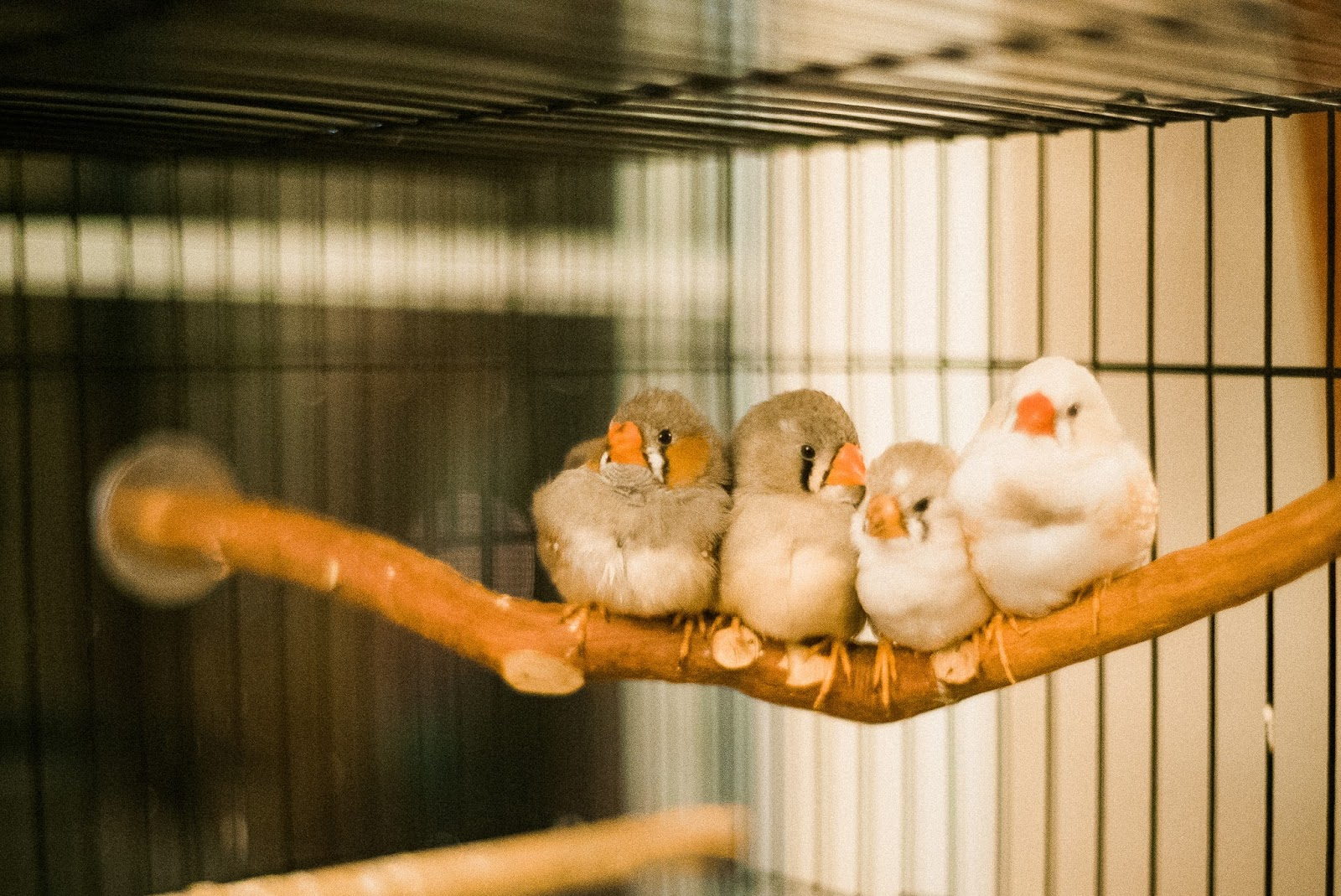Sony a7s zebra finches