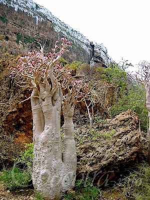 [Image: 1.1287790796.33_socotra-yemen.jpg]