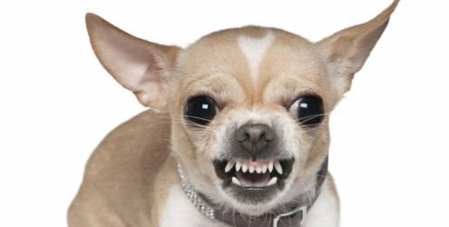pet shops Por que o Comportamento Agressivo do Cão