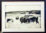 Lost Prairie