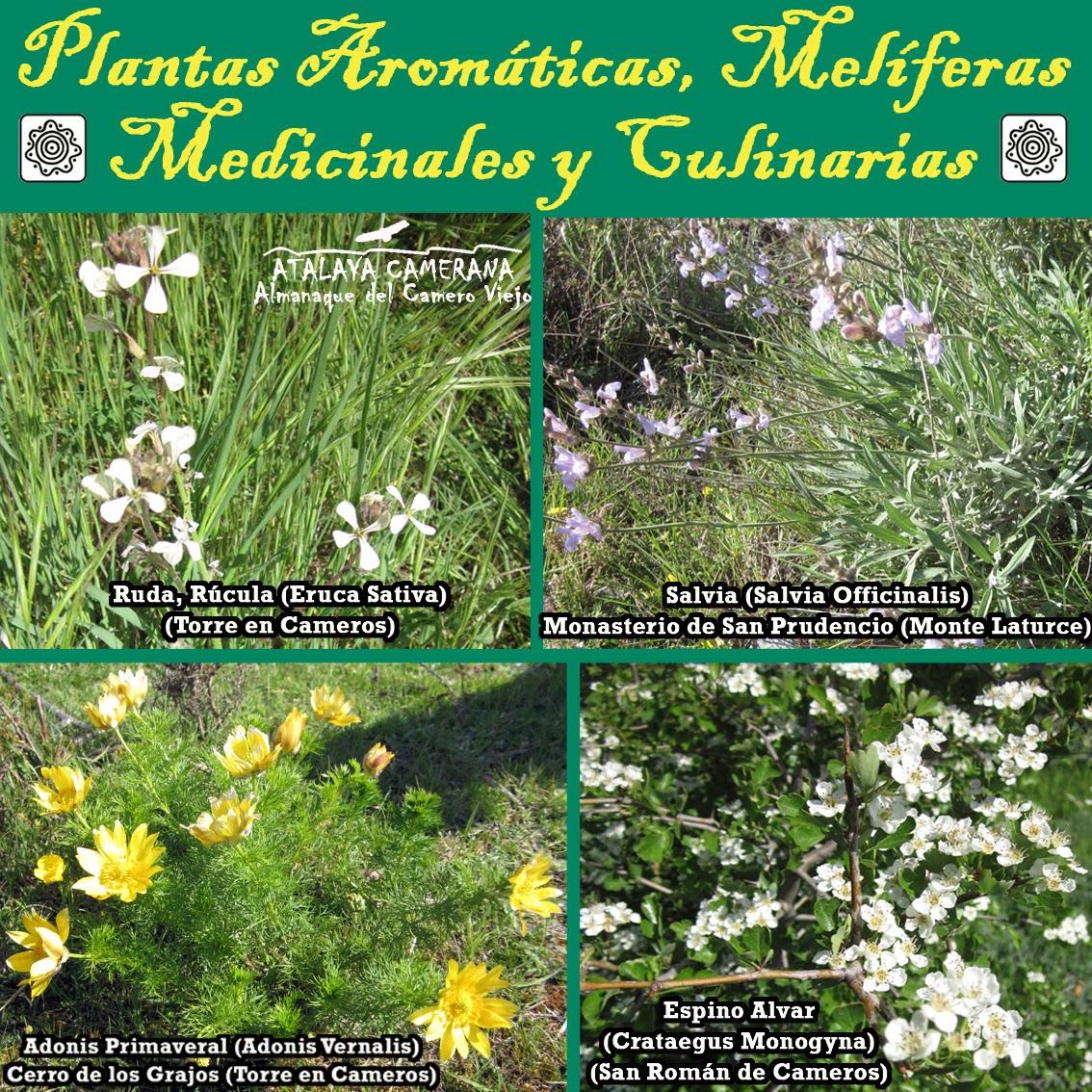 Plantas aromáticas, melíferas, medicinales y culinarias