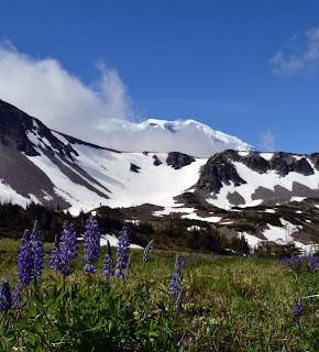 Picture of Mt. Rainier with wildflowers blooming