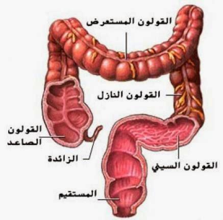 انتفاخ القولون وغازات القولون والعلاج   gases and Swelling of colon
