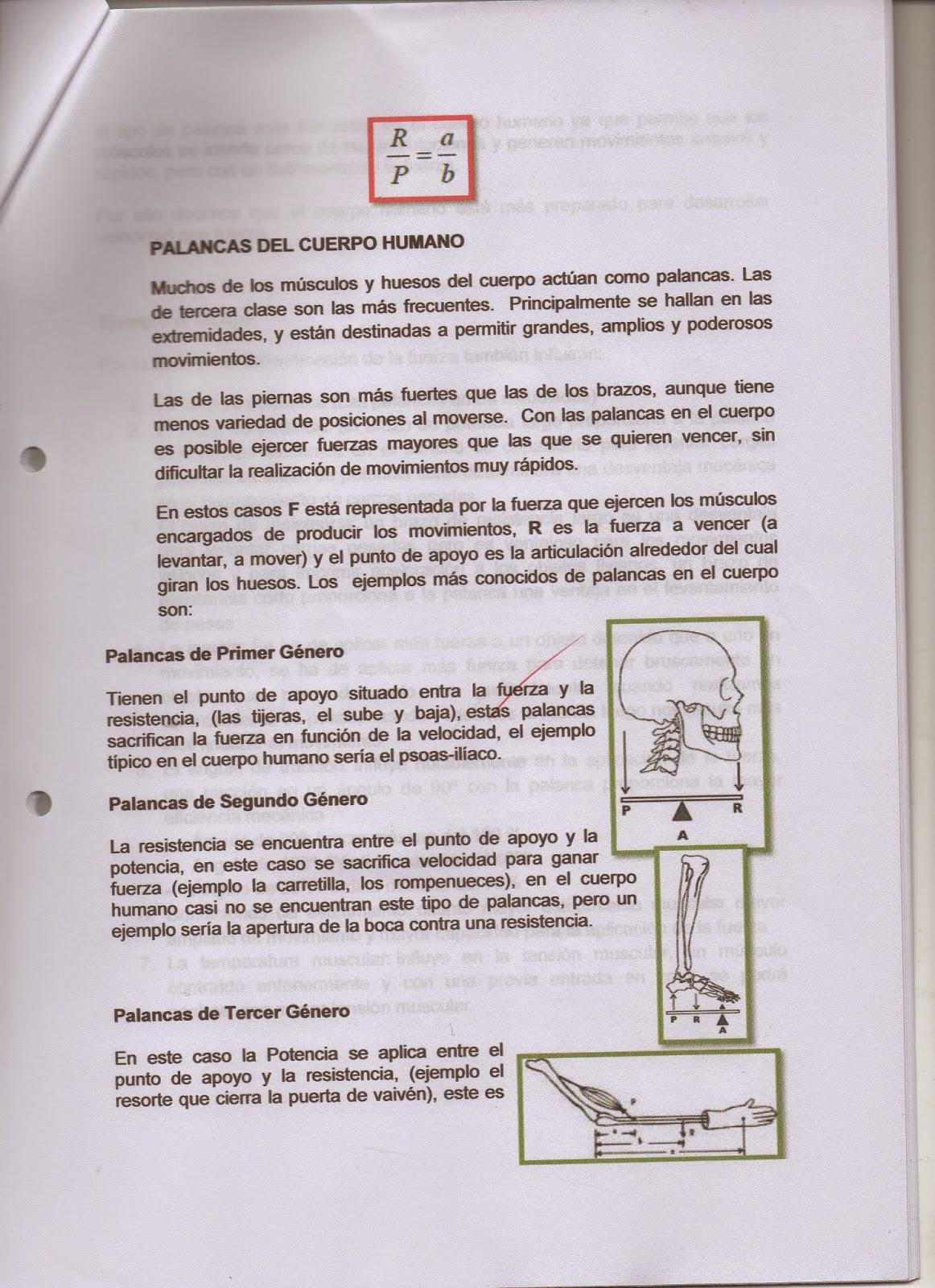 CAMINO DEL ESTUDIANTE DE MEDICINA : PRÁCTICA DE BIOFÍSICA: PALANCAS ...