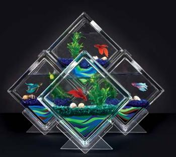 Model Akuarium Modern Untuk Ikan Cupang Hias - Dunia Akuarium