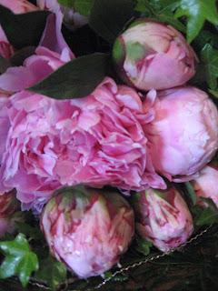 rosa tulipan buketter