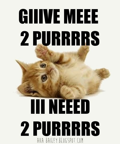 Cat 2 Purrs Meme by akaBailey