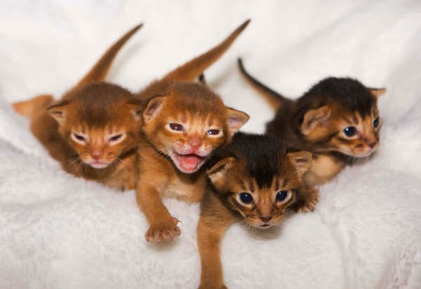 Anemia In Cats With Kidney Enzyme Failure