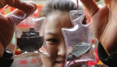 moda china pequeños animales usados como llaveros